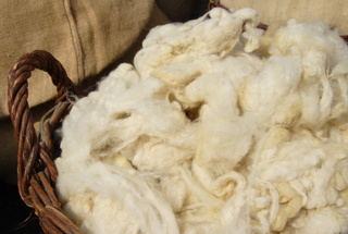 raw-sheep-wool